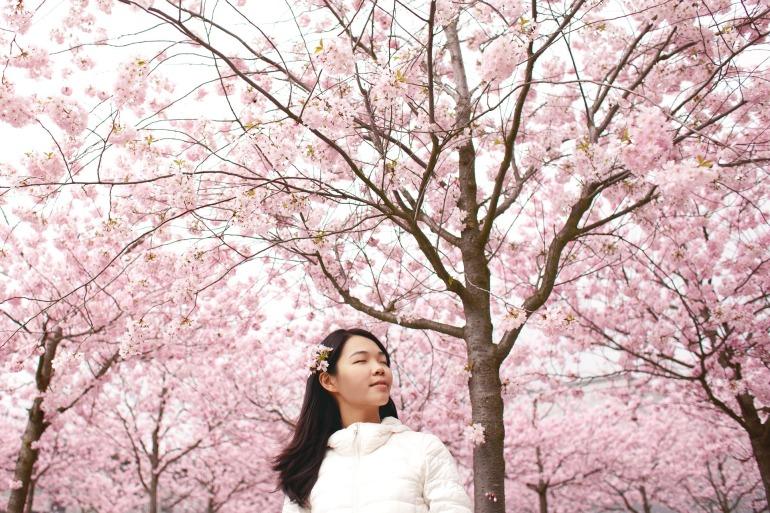 flower-2606238_1920.jpg